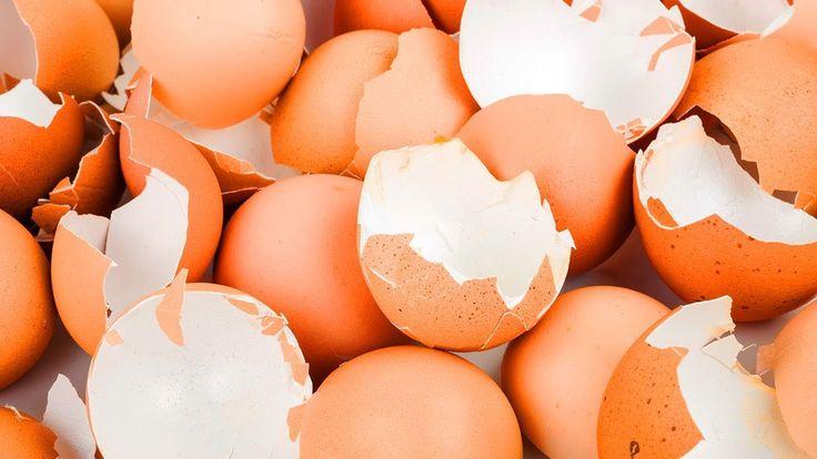 10 gute Gründe warum du Eierschalen nicht wegwerfen sollest!