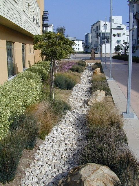 Dry streamed and bioswale plantings