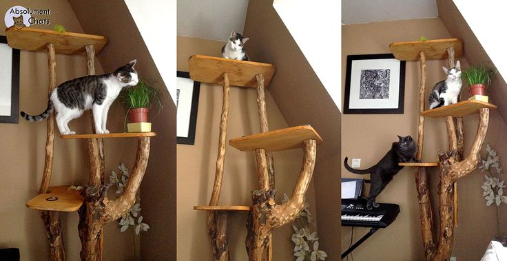 Arbre A Chaton : 17 best images about arbre a chat on pinterest home ~ Premium-room.com Idées de Décoration