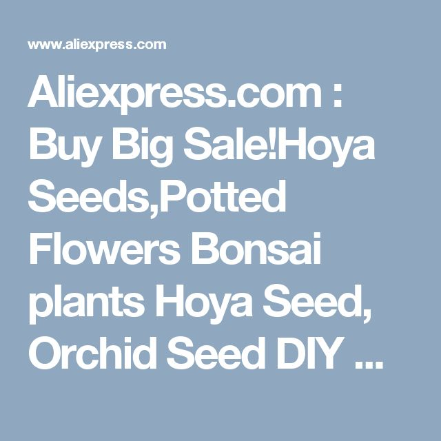 Aliexpress.com : Buy Big Sale!Hoya Seeds,Potted Flowers Bonsai plants Hoya Seed, Orchid Seed DIY Home Garden 100 Particles/Pack,#4FNNI6 from Reliable garden side suppliers on Flower Garden