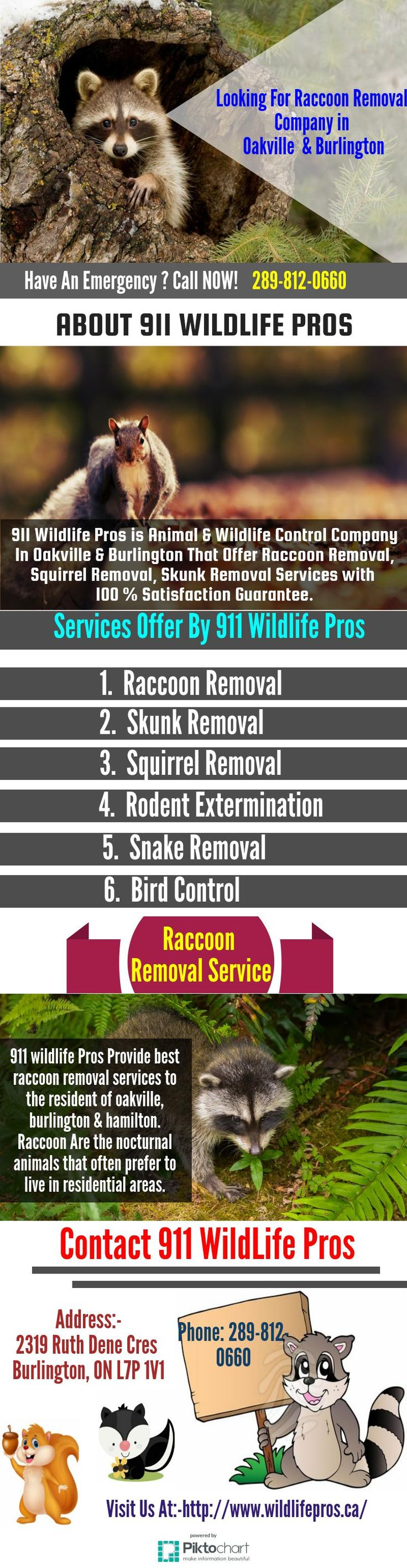 911 Wildlife Pros is Burlington animal control Comapny taht provide solution for Raccoon Removal, Squirrel Removal, Skunk Removal in Burlington, Oakville & Hamilton. We offer animal control & wildlife removal services to both residential and commercial clients. Feel free to contact (289-812-0660) to know more about our services.