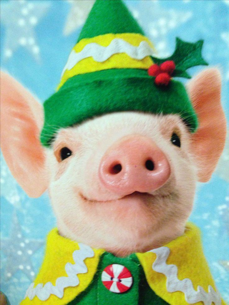 Best 25 Cute Piggies Ideas On Pinterest Cute Piglets