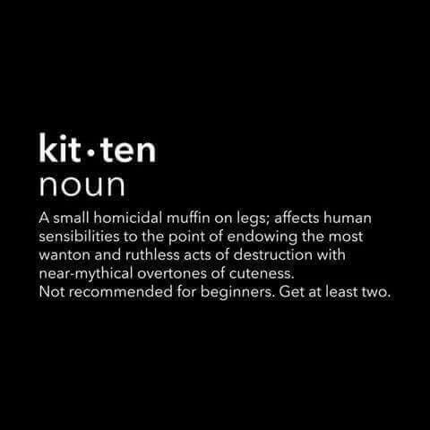 Lol but kittens are so cute! Lol