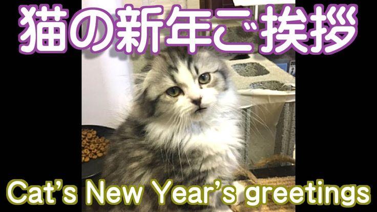 猫の新年挨拶【面白い可愛い猫動画】