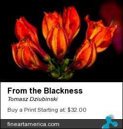 From the Blackness