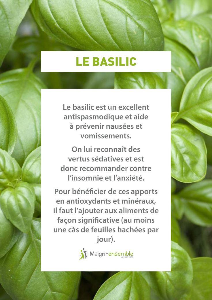 Fruits et Légumes - Le Basilic // Bienfaits Alimentation saine et équilibrée