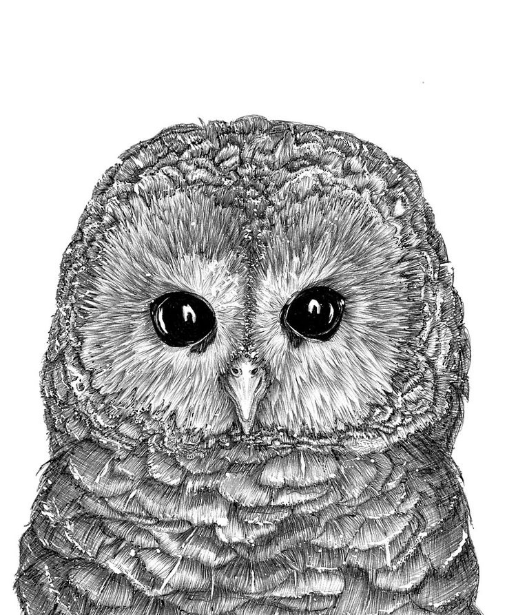 Tiny Owl by ECMazur #art #illustration #penart #animalart #drawing #realism #sketch #ink #owl #bird #feather