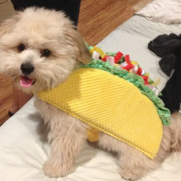 Taco Small Dog Halloween Costumes