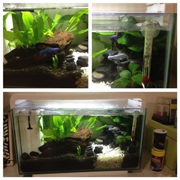 11 best images about betta fish tank setup ideas on for Fighting fish tank