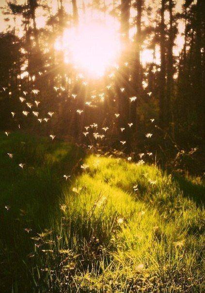... жизнь заключает в себе много ценного и если мы умудряемся ничего в ней не найти, то виноваты мы, а не жизнь.