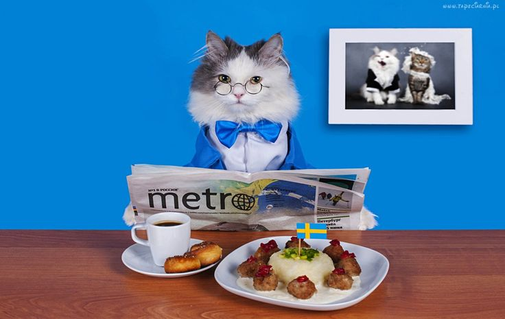 Kot, Gazeta, Kawa, Jedzenie, Śmieszne