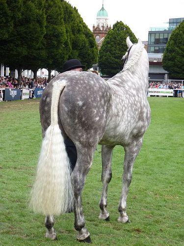 That's fluffy tail! #horse #horses #braids #braiding