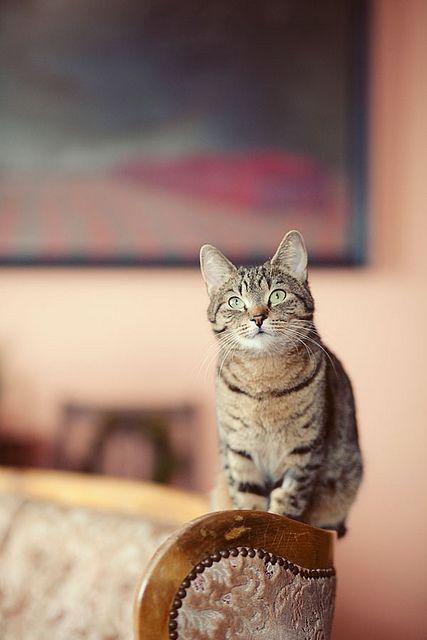 #cat #cats