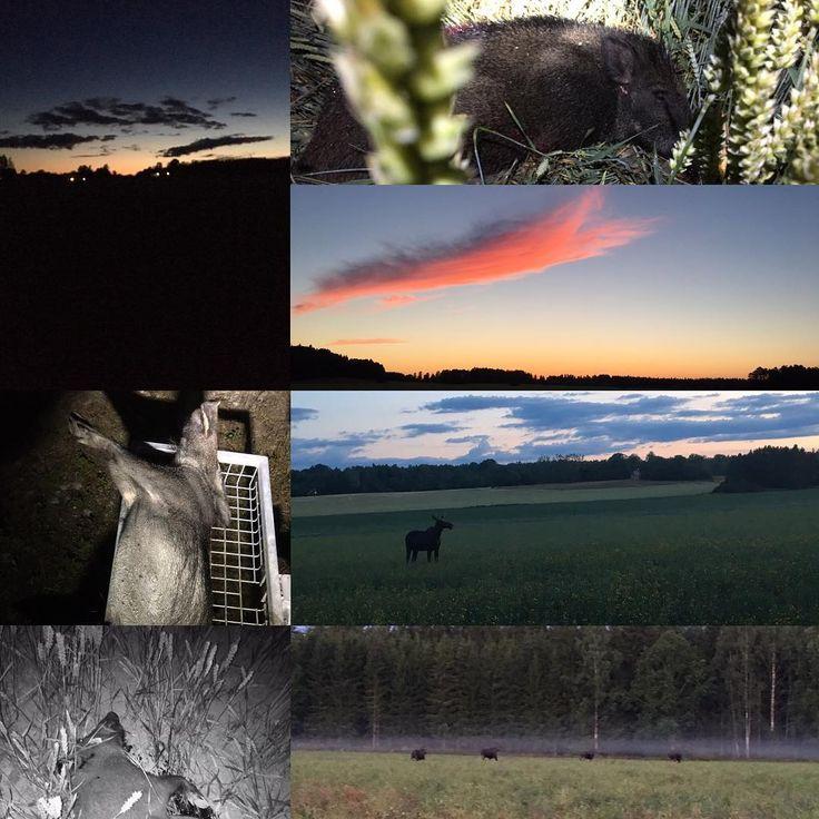 Spannmåls jakten bjuder på många fina tillfällen ! #jakt #jägare #spannmålsjakt #hunter #hunt #hunting #jaktbilder #livetpålandet #huntingphoto #zeiss http://misstagram.com/ipost/1567402962951068698/?code=BXAiLC6l9wa