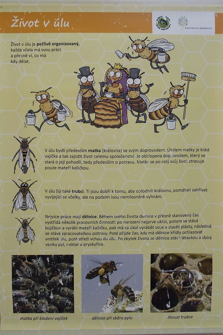 Den Země - včely, projekt Člověk a jeho svět (CZ.1.07/1.1.32/01.0034) - ZŠ…