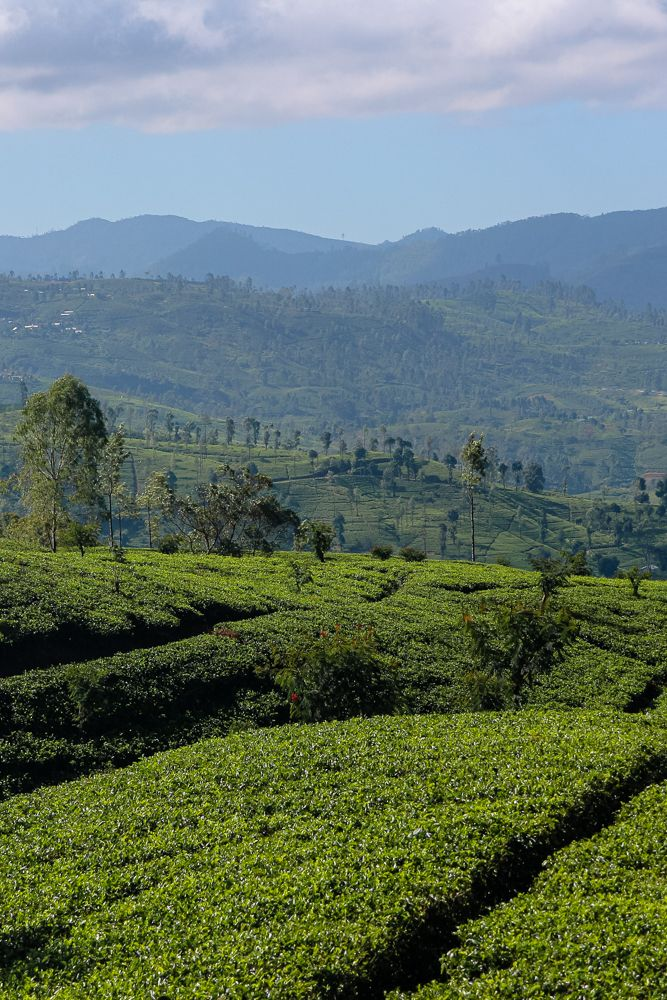 14 Tips For Travelling Sri Lanka Something Of Freedom Beautiful Places To Visit Asia Travel Travel