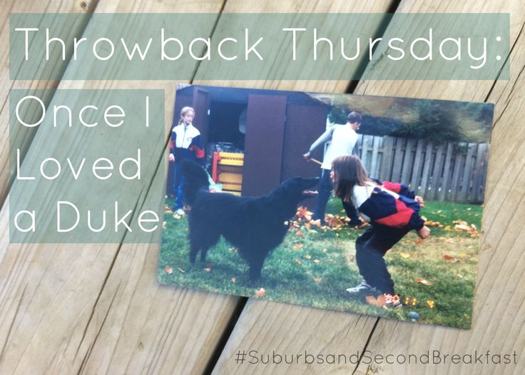 Throwback Thursday: Once I Loved a Duke   #SuburbsandSecondBreakfast #lifestyle #personal #blog #dogs #rescuedog #throwbackthursday #TBT