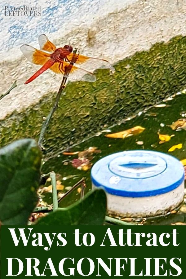 797a3c37c9a7b49b957429c40efacd07 - How To Get Rid Of Mosquito Larvae In Water Feature