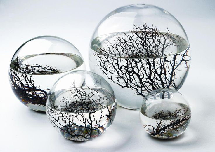 EcoSphere | Self-Sustaining Ecosystem