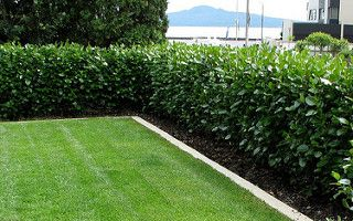 Landscape by Barbara Garrett, Auckland using Living Boundary™ griselinia instant hedges | by Living Walls Instant Hedges