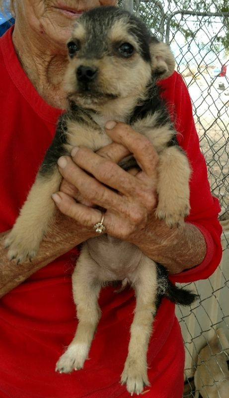 Cami is an adoptable terrier searching for a forever family near Surprise, AZ. Use Petfinder to find adoptable pets in your area.