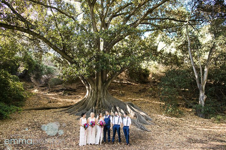 Perth Wedding portrait location - the big fig tree across the road from the Swan Brewery