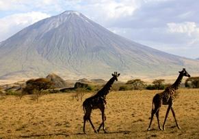 Tansanias Serengeti: Ein Tierparadies in Ostafrika