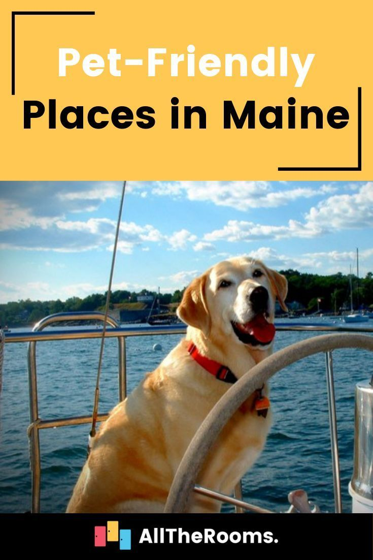 Pet Friendly Maine Our Favorite Locations Alltherooms The Vacation Rental Experts Dog Friendly Vacation Pet Friendly Vacations Dog Friendly Hotels