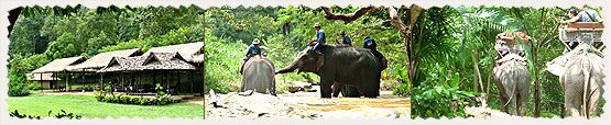 Watch elephants paint pictures and then ride them through the forest.  The tour is followed with a bamboo raft ride    down the river and then an ox-cart ride back to base.  Fun!