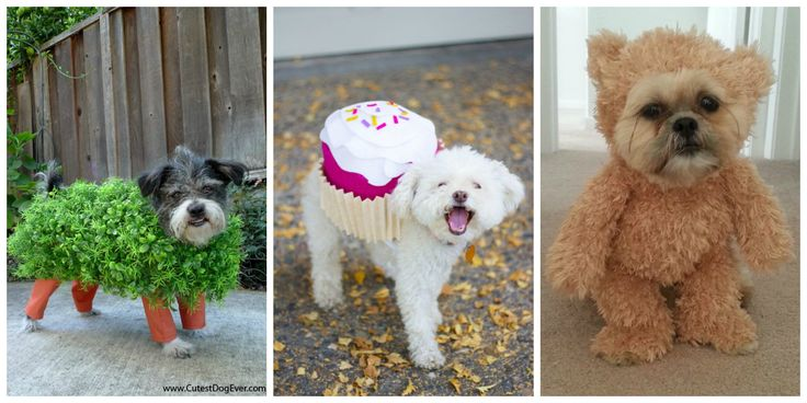 15 Cute Dog and Cat Halloween Costumes - Best Ideas for Pet Halloween Costumes