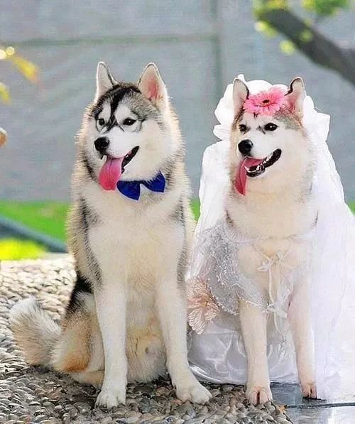 Best APAIXONADOS POR HUSKY SIBERIANOS Images On Pinterest - Guy quits his job to go on epic adventures with his husky