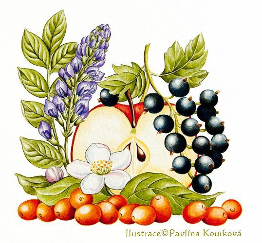 Mixed herbs (apple, sea-buckthorn, currant and    liquorice)