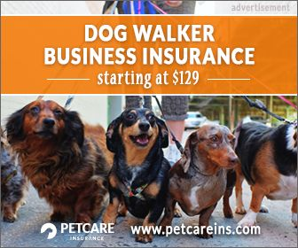 5 hurdles to starting a dog walking business - and what you can do - ThatMutt.com: A Dog Blog