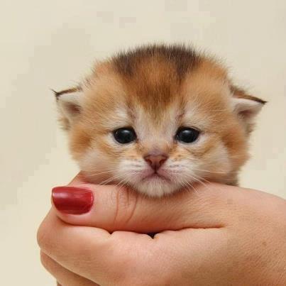 Cute......!