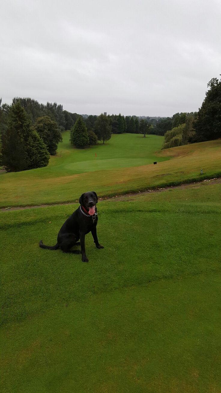 Alfie loves a good walk