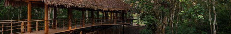Treehouse Lodge in Peru