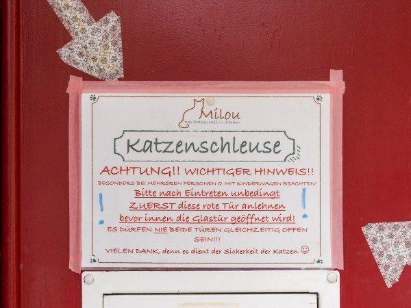 Katzencafé Katzencafe Milou 360 Grad Einblick Eindruck Aachen Stadt tr4vel.de Reise Blog