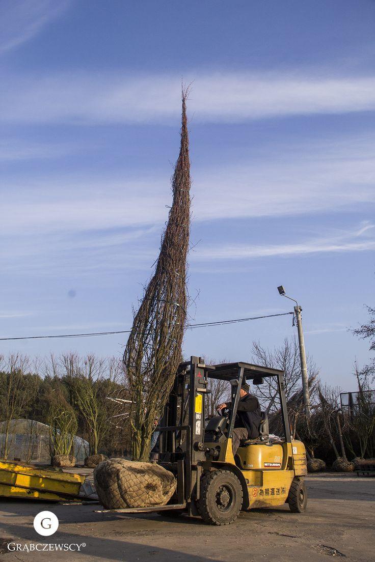 Praca wre! :)  #Work #Grabczewscy #Tree #Design #Garden #Architecture