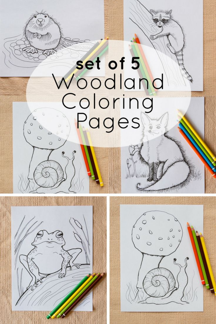 0cean coloring pages -  Set Of 5 Woodland Animal Coloring Page Printables Explore The Woods And Bring Sweet