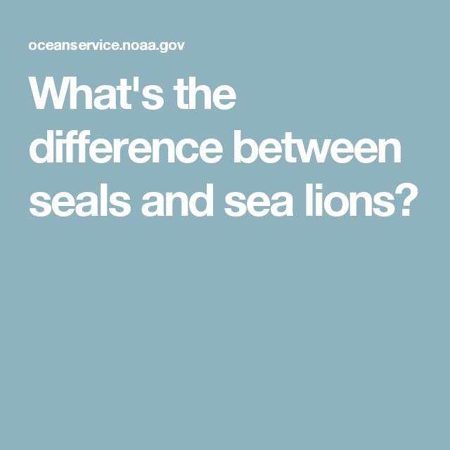 What's the difference between seals and sea lions?