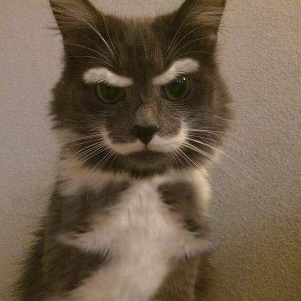 17 Katter saknar personlighet