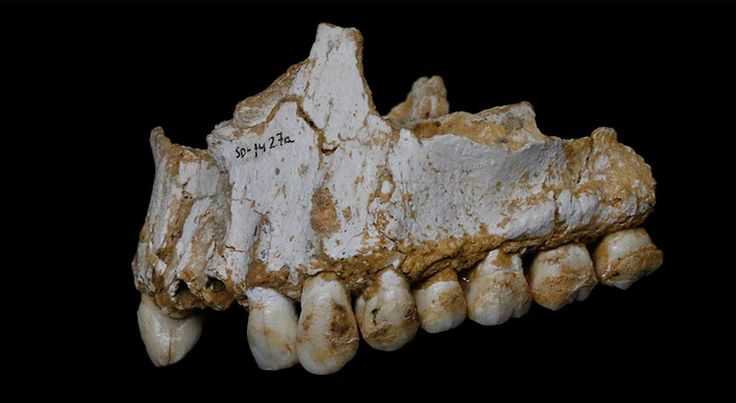 Researchers have reconstructed the diet and disease history of ancient Neandertals.