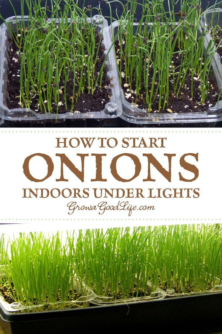 Garden decor sun face  How to Grow Onions From Seed  Vegetable Gardening  Pinterest