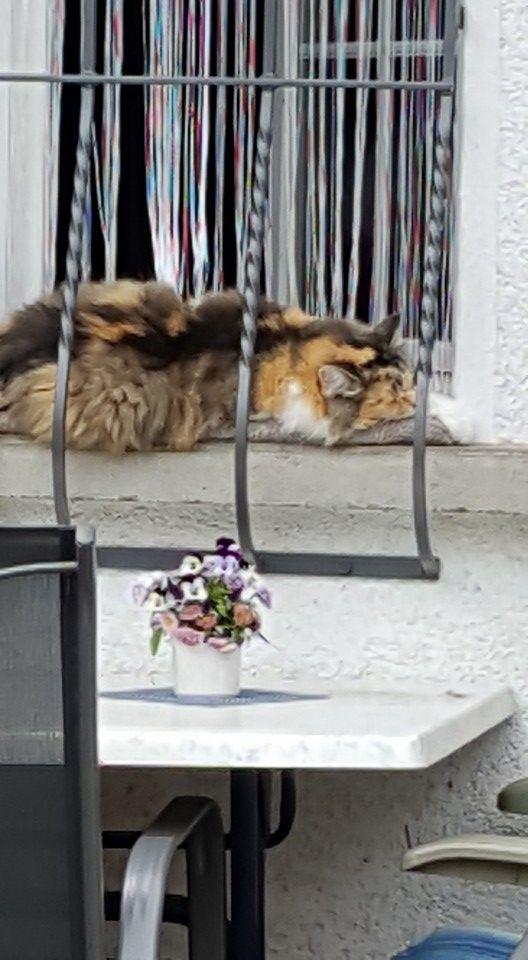 Schweiz - Thun müde Katze
