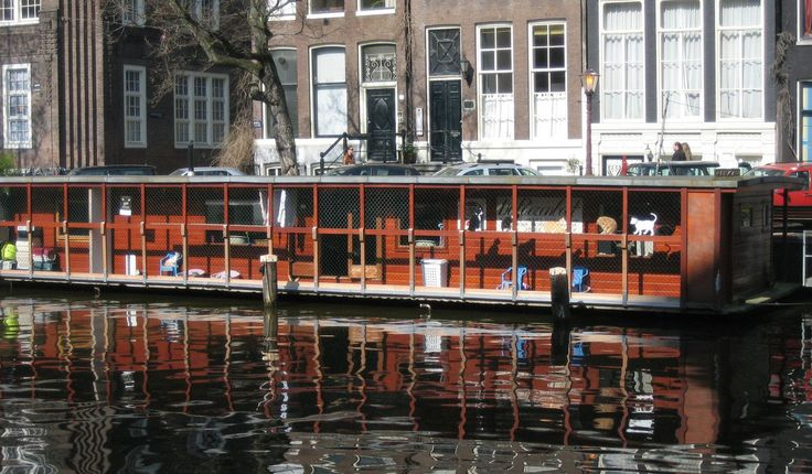 "<p>The ""Catboat,"" or de Poezenbout, is home to about 5o homeless cats, who live on a floating shelter on the country's picturesque canal belt.</p>"