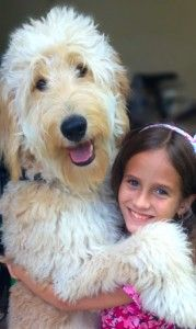 Top 10 Hypoallergenic Dog Breeds - 10 Best Dogs for Allergies | I Love My Dog So Much
