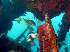 Top 5 Aussie scuba dive sites -- SS Yongala