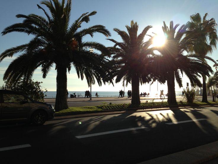 Sun beyond palms at Promenade des Anglais.
