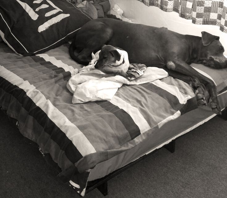 Futons even make great beds for dogs! Look how comfy these two are on one of our futon beds!