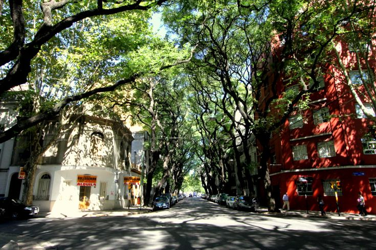 01 Buenos Aires- A Tree Lined Street In The Polermo